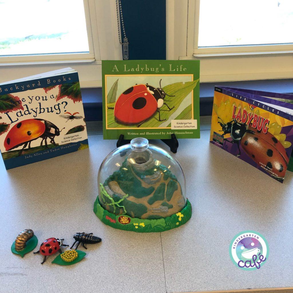 ladybug life cycle for kids